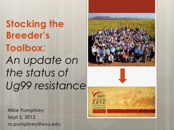 Stocking the Breeder's Toolbox:An update on the status of Ug99 resistance