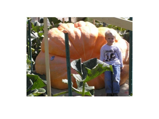 Cut through the stem end of the pumpkin along your outline with a sharp knife or pumpkin-carving tool. Use a back-and-fort...