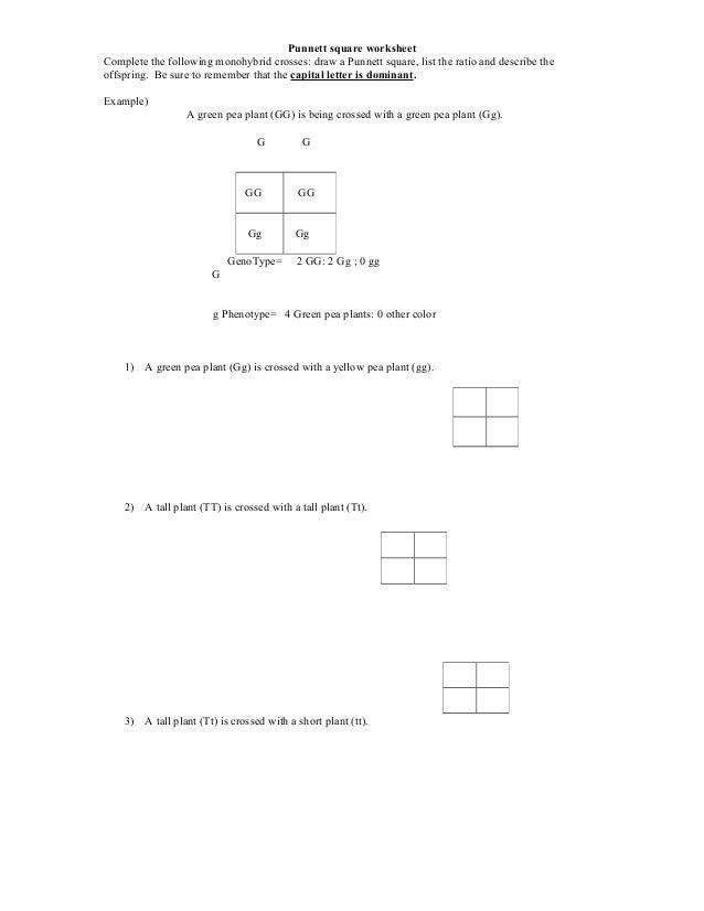 Punnett square worksheet