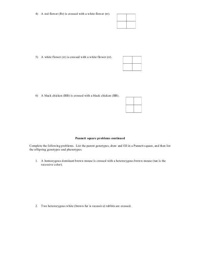 Genotype Phenotype Worksheet – Genetic Crosses Worksheet