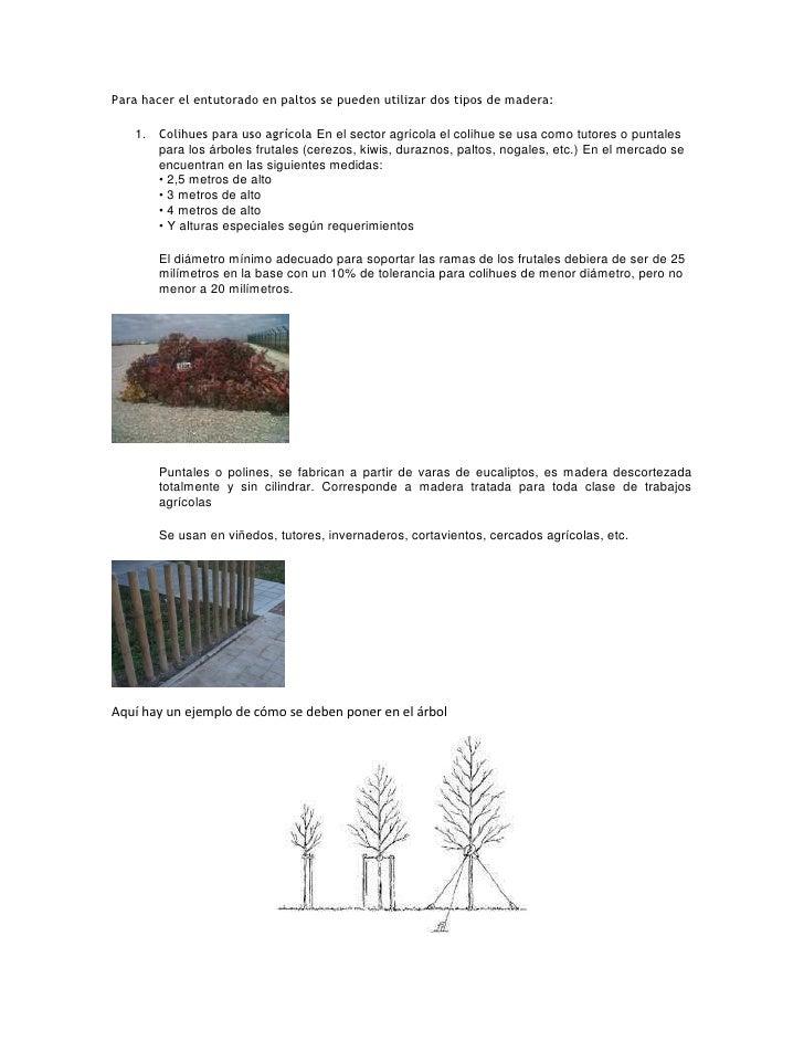 Para hacer el entutorado en paltos se pueden utilizar dos tipos de madera:   1. Colihues para uso agrícola En el sector ag...