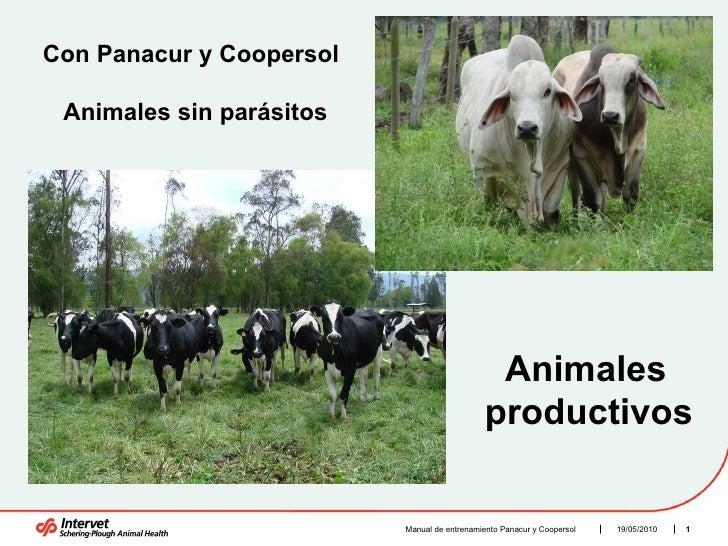 19/05/2010 Manual de entrenamiento Panacur y Coopersol  Con Panacur y Coopersol  Animales sin parásitos  Animales  product...