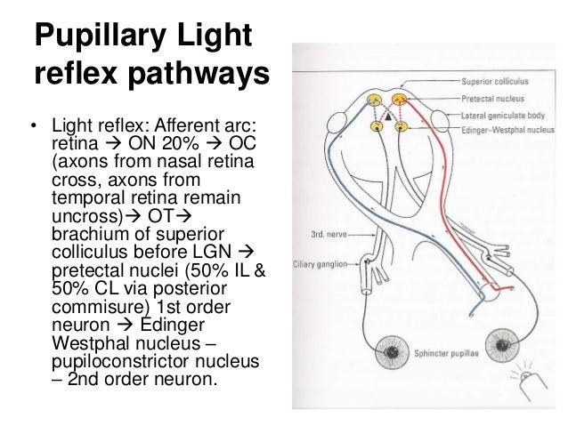 light reflex pathway gallery