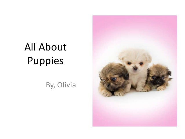 All AboutPuppies    By, Olivia