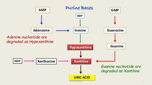 uric acid degradation thesis