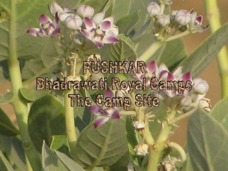Pushkar Camp Site
