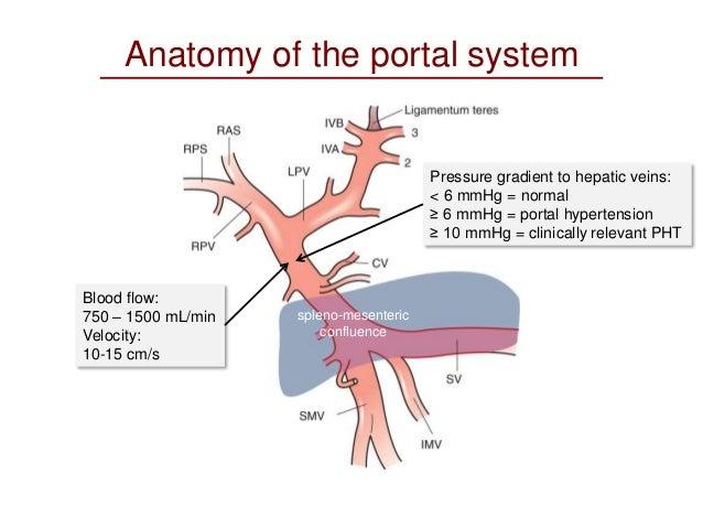 Portal Vein Anatomy Picture