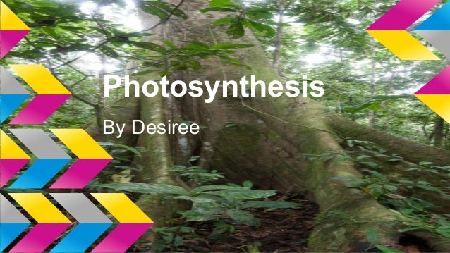 Photosynthesis By Desiree