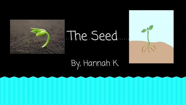 The Seed By, Hannah K.