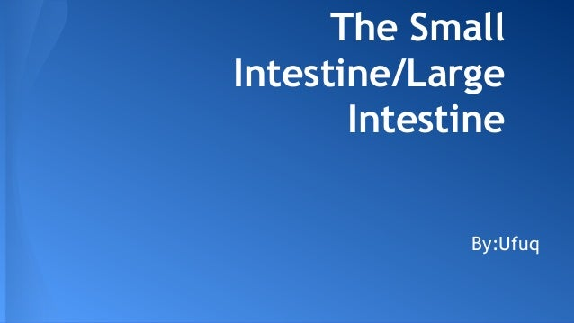 The Small Intestine/Large Intestine By:Ufuq