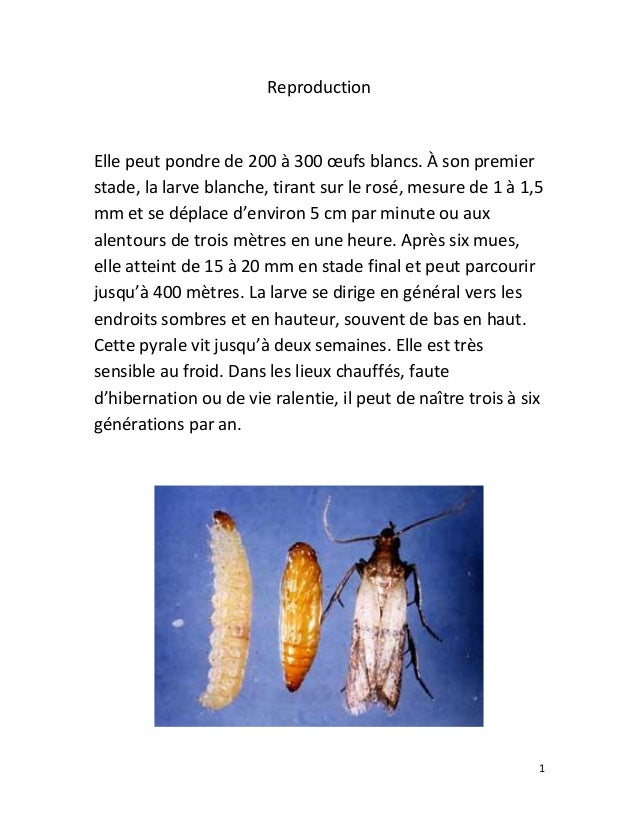 Reproduction  Elle peut pondre de 200 à 300 œufs blancs. À son premier stade, la larve blanche, tirant sur le rosé, mesure...