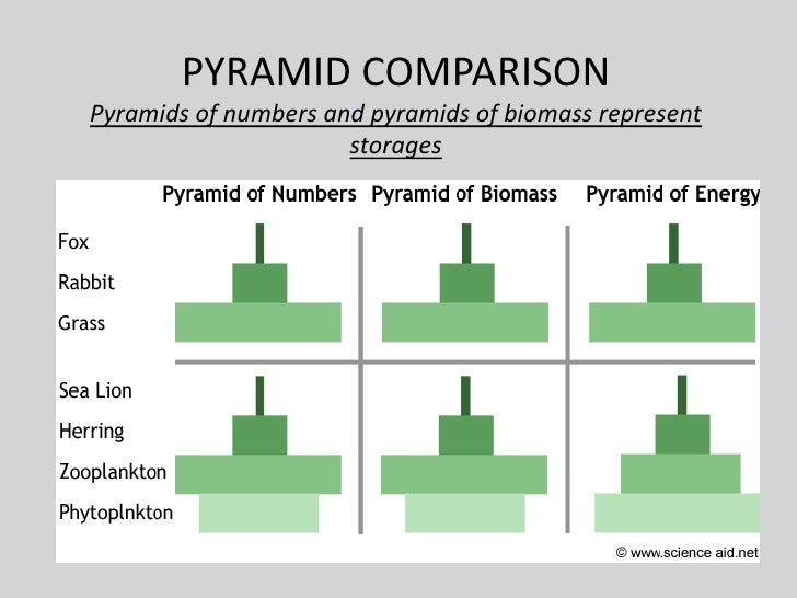 What are the advantages of measuring and determining pyramids of number and biomass?