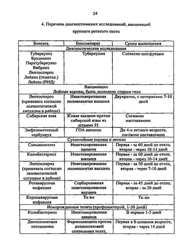 Схема вакцинации крс против бруцеллеза