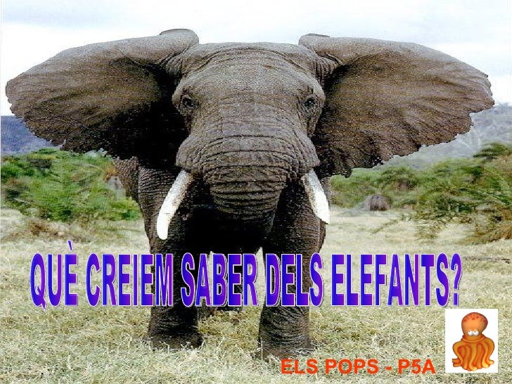 ELS POPS - P5A QUÈ CREIEM SABER DELS ELEFANTS?