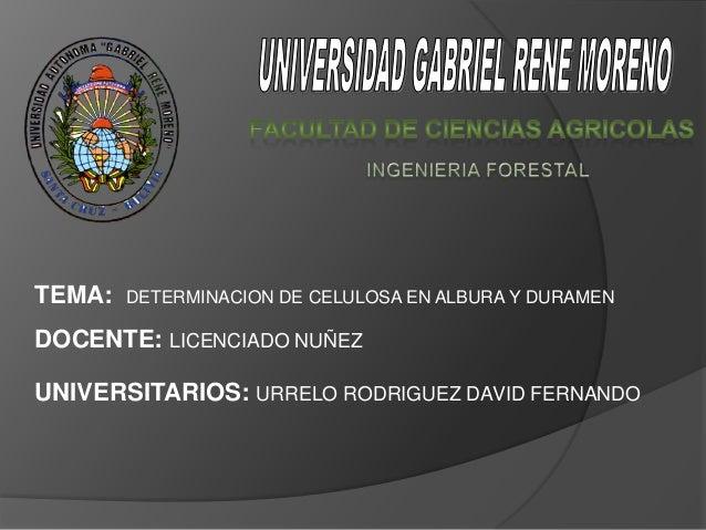 TEMA:   DETERMINACION DE CELULOSA EN ALBURA Y DURAMENDOCENTE: LICENCIADO NUÑEZUNIVERSITARIOS: URRELO RODRIGUEZ DAVID FERNA...