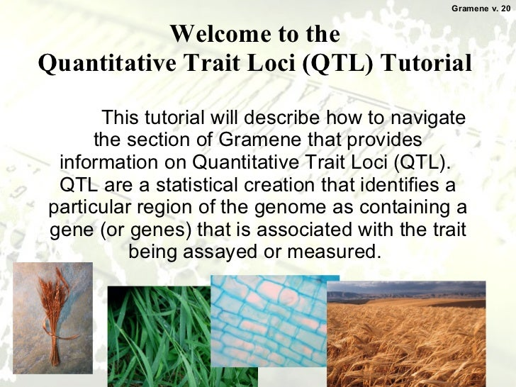 Welcome to the  Quantitative Trait Loci (QTL) Tutorial  This tutorial will describe how to navigate the section of Gramene...
