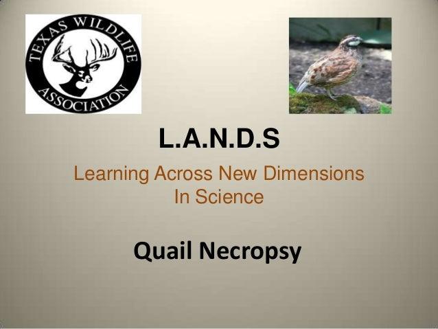 Quailnecropsy