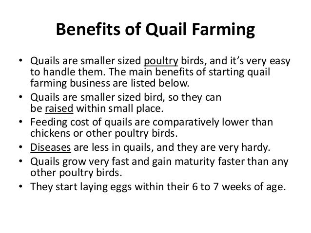 Starting a Quail Farm – Sample Business Plan Template