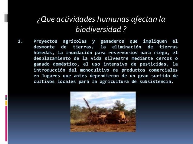 1. Proyectos agrícolas y ganaderos que impliquen eldesmonte de tierras, la eliminación de tierrashúmedas, la inundación pa...