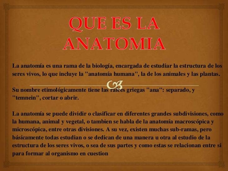 Que es la anatomia