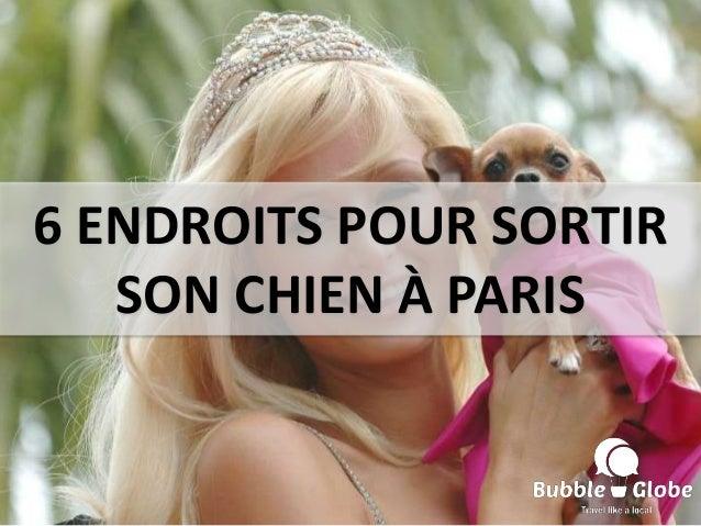 6 ENDROITS POUR SORTIR SON CHIEN À PARIS