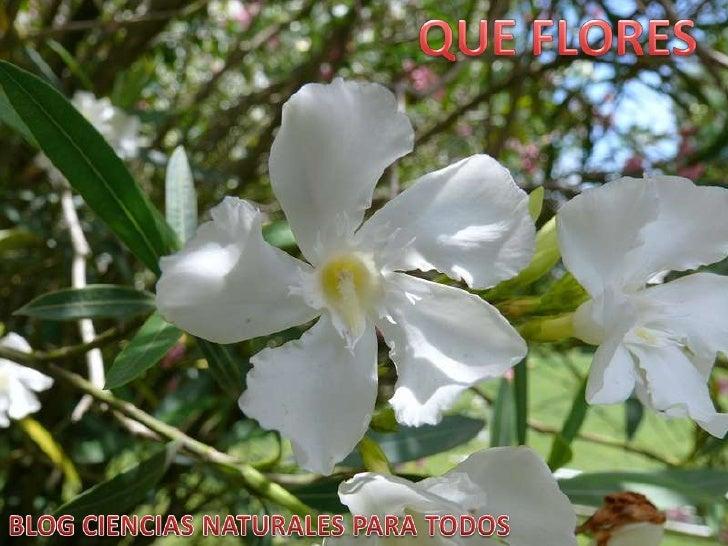 Que Flores