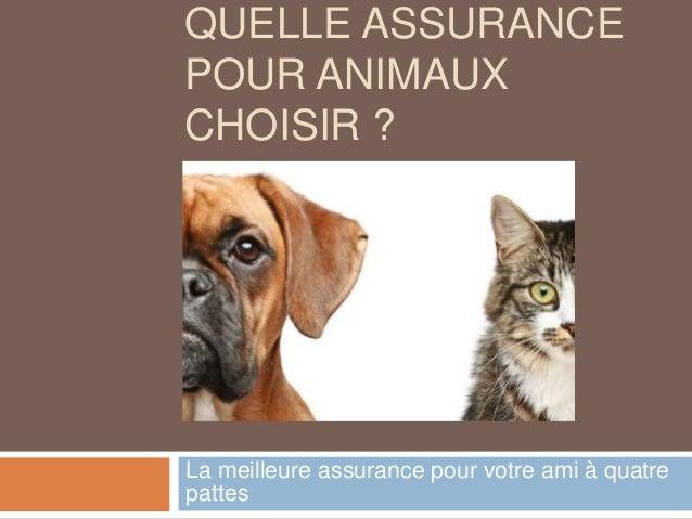 QUELLE ASSURANCE POUR ANIMAUX CHOISIR ? La meilleure assurance pour votre ami à quatre pattes