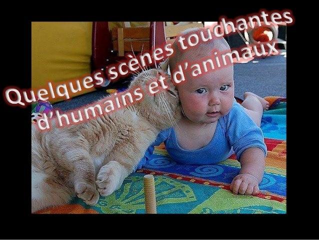 Quelques scenes touchantes d'humains et d'animaux