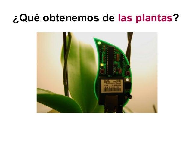 ¿Qué obtenemos de las plantas?
