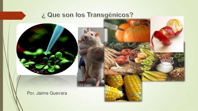 ¿Que son los transgénicoss, por. j guevara