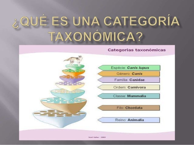 Qué es una categoría taxonómica