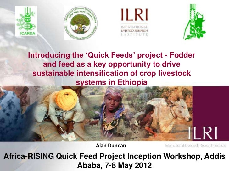 Introducing the 'Quick Feeds' project - Fodder and feed as a key opportunity to drive sustainable intensification of crop livestock systems in Ethiopia