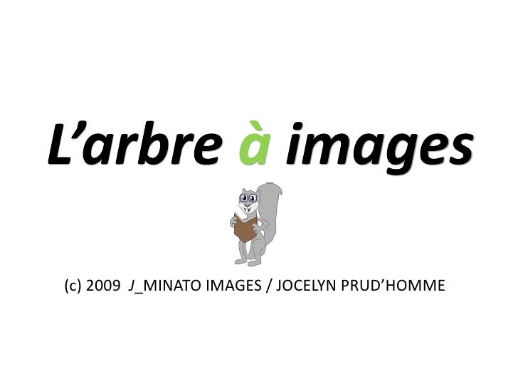 L'arbre àimages<br />(c) 2009  J_MINATO IMAGES / JOCELYN PRUD'HOMME<br />