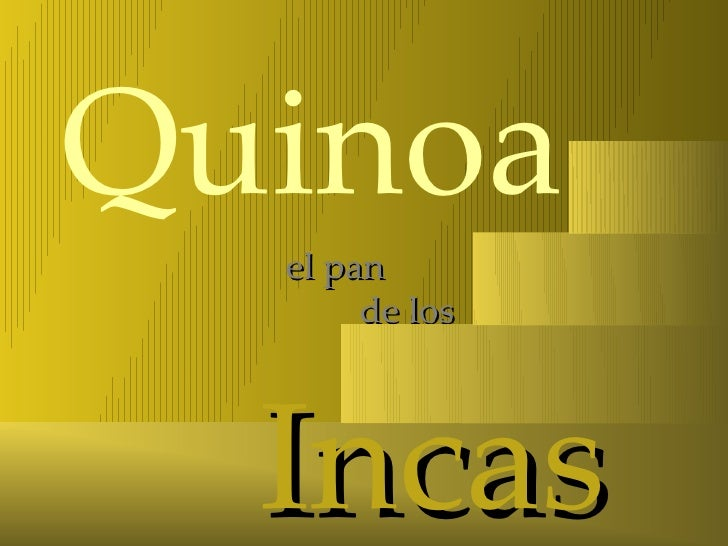Quinoa  el pan       de los  Incas