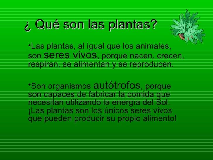 ¿ Qué son las plantas?•Las plantas, al igual que los animales,son seres vivos, porque nacen, crecen,respiran, se alimentan...