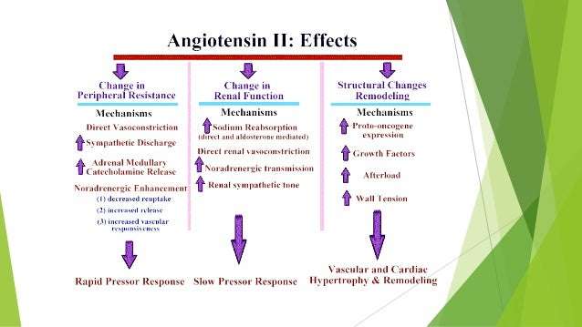 renin angiotensin system for dummies with Drugs Acting On Renin Angiotensin Aldosterone System on Watch as well Drugs Acting On Renin Angiotensin Aldosterone System in addition 2742 besides 4192419 as well Raas System.