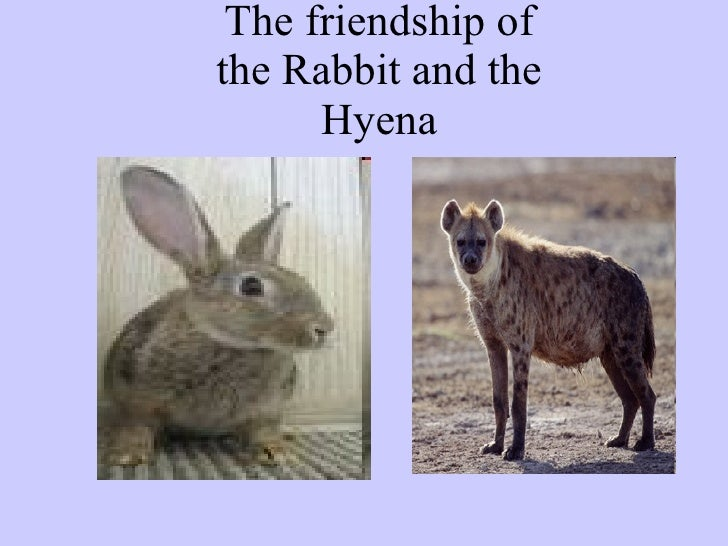 The friendship of the Rabbit and the Hyena