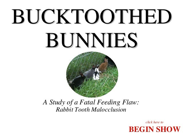 BUCKTOOTHED BUNNIES A Study of a Fatal Feeding Flaw: Rabbit Tooth Malocclusion click here to  BEGIN SHOW