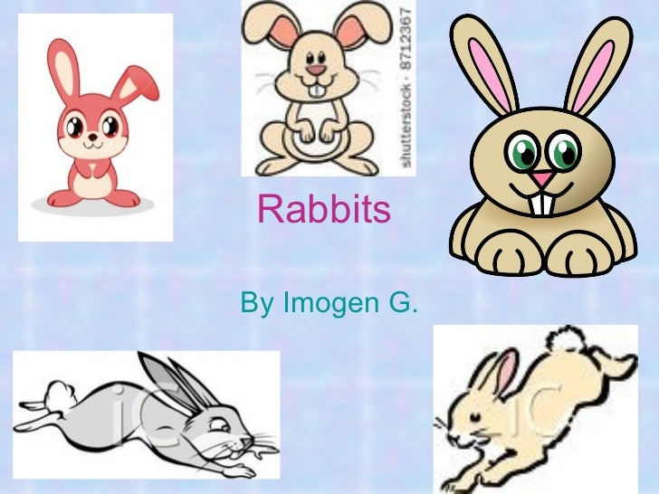 Rabbits (IG)