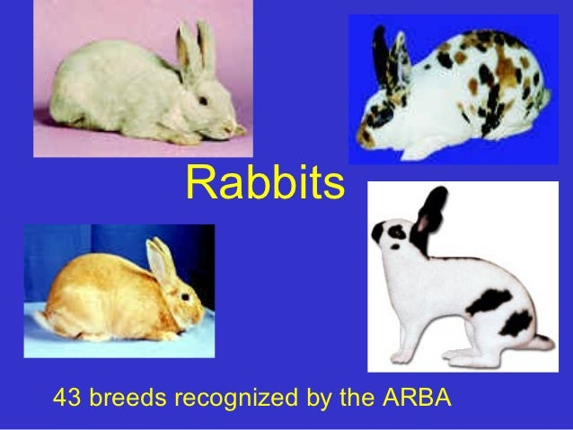 Rabbits43 breeds recognized by the ARBA
