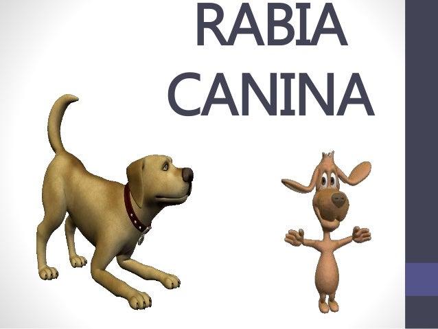 RABIA CANINA