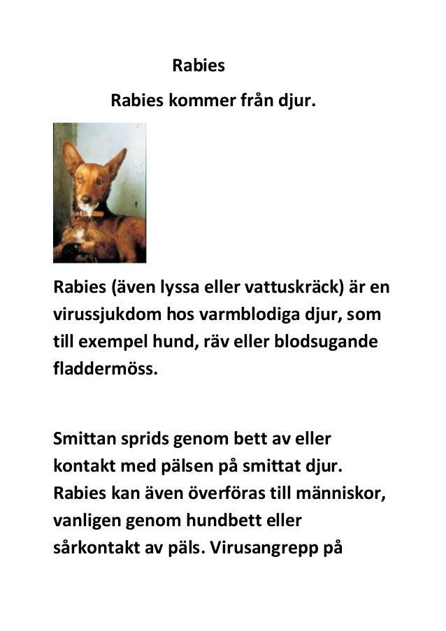 Rabies Rabies kommer från djur.  Rabies (även lyssa eller vattuskräck) är en virussjukdom hos varmblodiga djur, som till e...