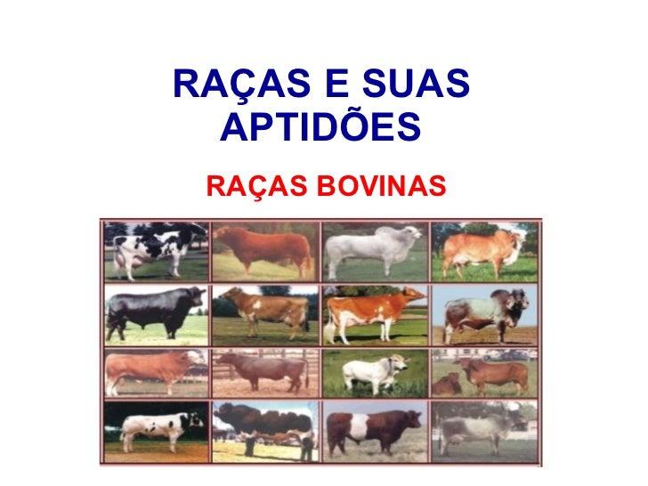 RAÇAS E SUAS APTIDÕES RAÇAS BOVINAS