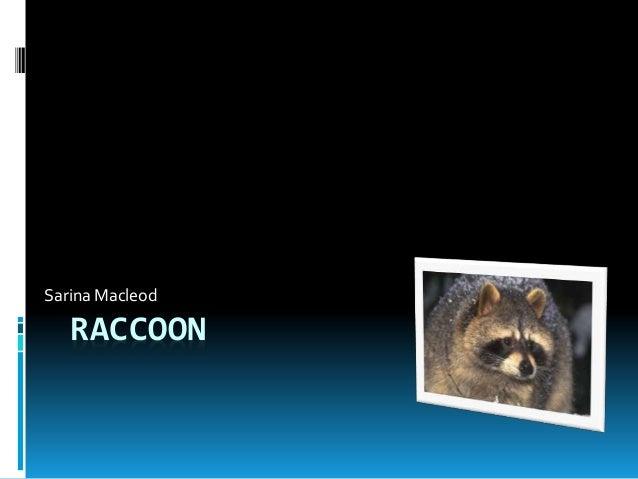 RACCOON Sarina Macleod