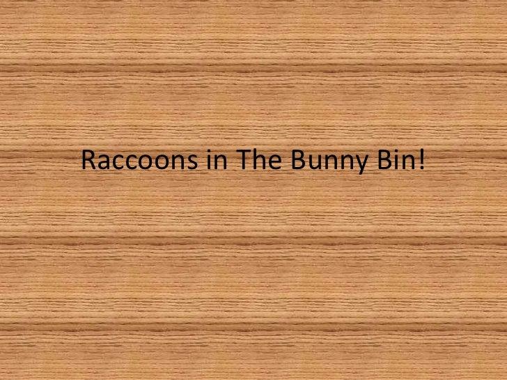 Raccoons In The Bunny Bin