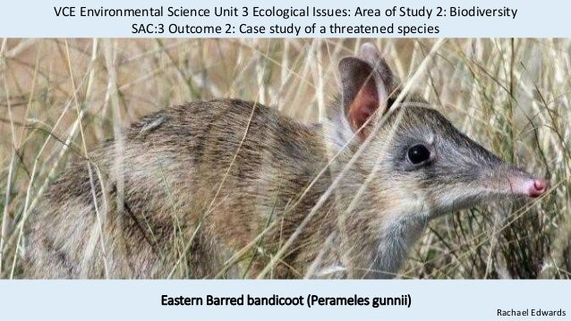 Eastern Barred bandicoot (Perameles gunnii) Rachael Edwards VCE Environmental Science Unit 3 Ecological Issues: Area of St...