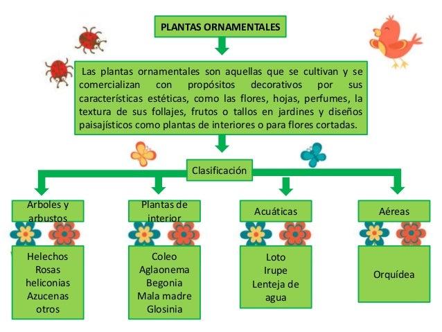 Radi48239proyecto jardines con las tics for Caracteristicas de las plantas ornamentales