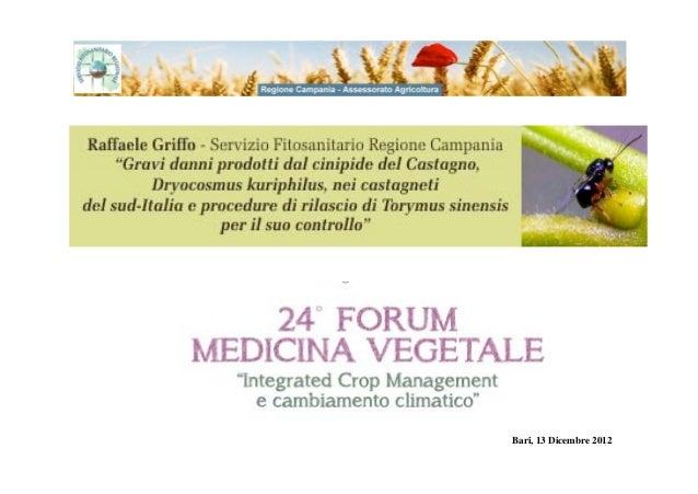 Raffaele griffocinipide-castagno-fmv-2012