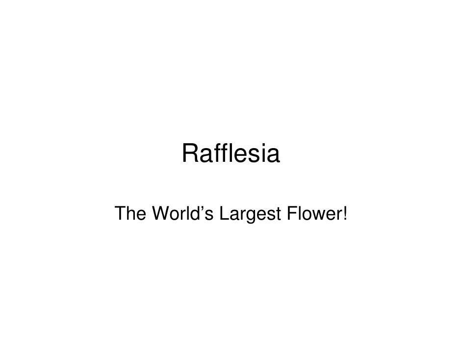 Rafflesia~The Worlds Largest Flower!