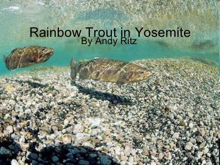 Rainbow trout in yosemite